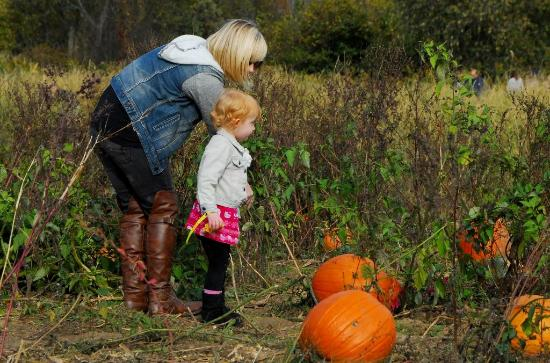 Maize Valley Market & Winery: Pumpkin Patch at Maize Valley