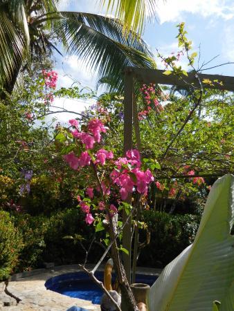 Villas Nicolas: Lovely flowering trees