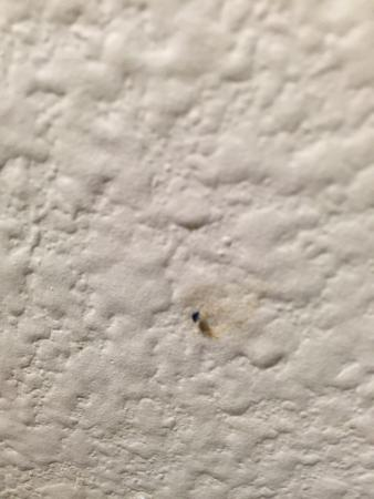 Extended Stay America - Dallas - Vantage Point Dr.: Bed bugs, mites, fleas, and lice...... That's what to expect when you stay at this extended stay