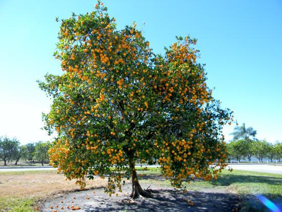 Florida's Natural Visitor Center