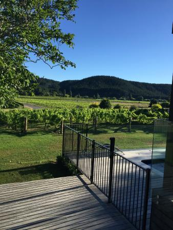 Kiwiesque : view across the vineyards