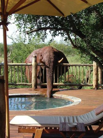 Etali Safari Lodge: Private game viewing deck welcomes unexpected guests.