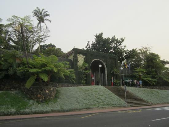 Jardín Botánico Tenerife. - Picture of Botanical Gardens (Jardin Botanico), P...