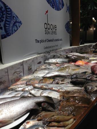 Above Sea level: Fresh Seafood