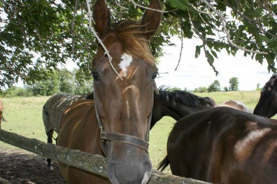Zephyr, Canada: Horses