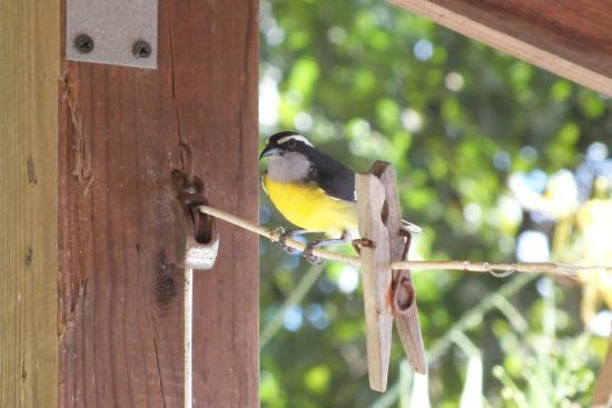 Carpe Diem Villa: Garden visitors 2