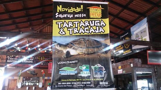 Restaurante Morada do Peixe : Tem tartaruga também