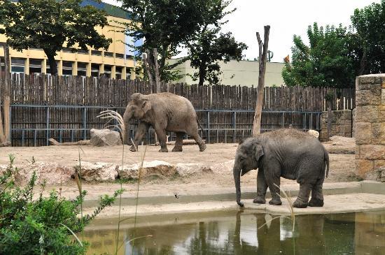 Budapest Zoo & Botanical Garden: Слоны