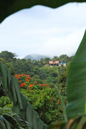Ceiba Country Inn: View to the West