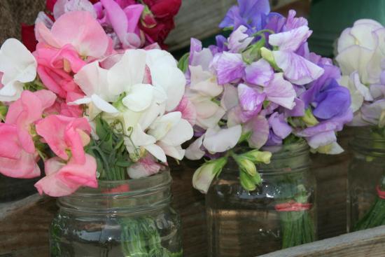 Deer Isle, ME: Farm fresh local flowers at the farmers market