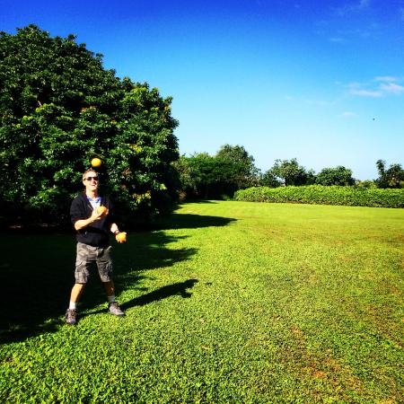 Aloha Cottages : Juggling our breakfast on the property!