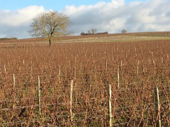Vinitour Centre-Loire : Vineyard