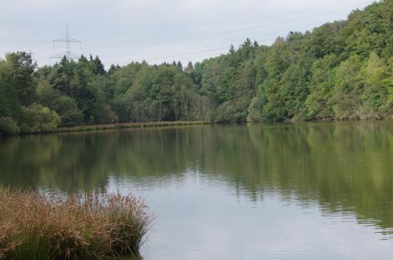 Hochwildschutzpark Hunsrück