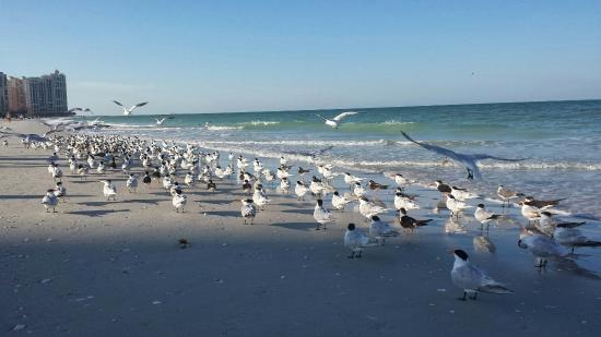South Marco Beach: Morning at Marco Beach. It's their beach. We're just visitors.