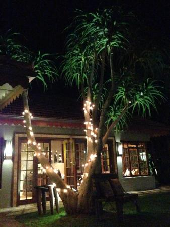 Singa Lodge: bar at night