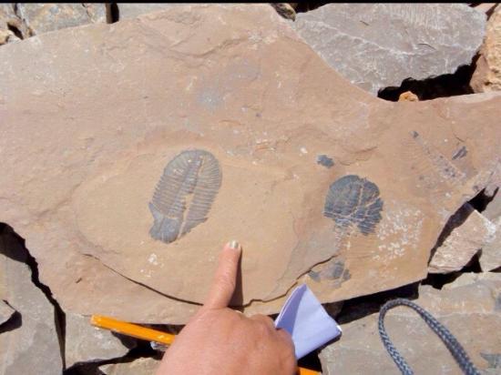 Burgess Shale: fossil