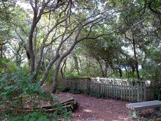 Springer's Point Preserve : The ancient cemetery....fascinating!