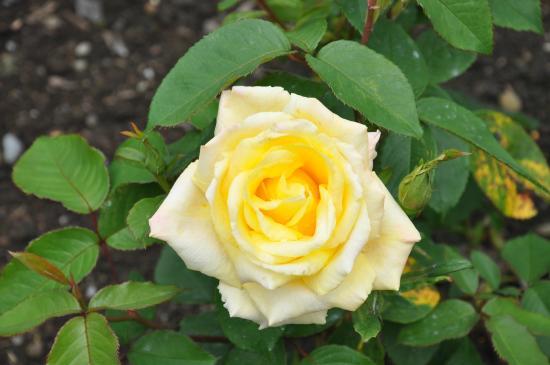 Queens Park: flowers