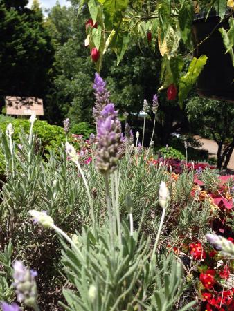 Flores picture of le jardin parque de lavanda gramado for Jardines de lavanda