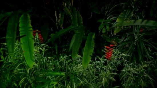 Zen Gardens : The gardens at night in the rain