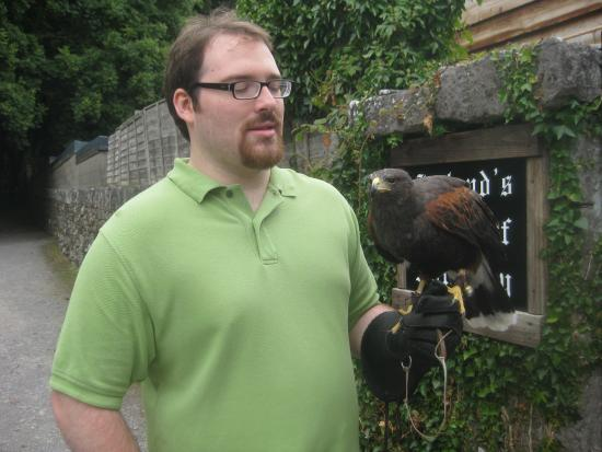 Hazel Grove B&B: Falconry