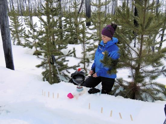 Banff Adventures: Anik brewing Maple Taffy