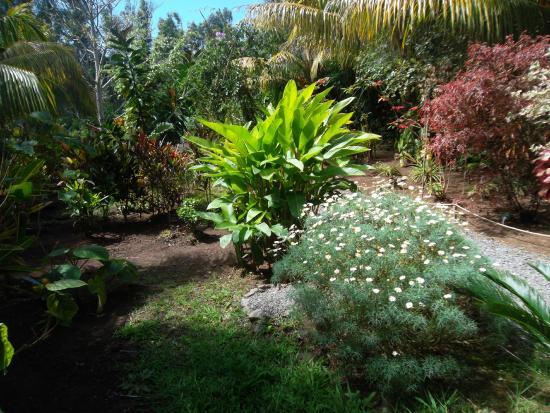 Plantes photo de jardin des 5 sens les rodrigues for Jardin 44 des 5 sens