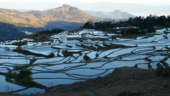 Yuanyang County, China: Blue rice terraces