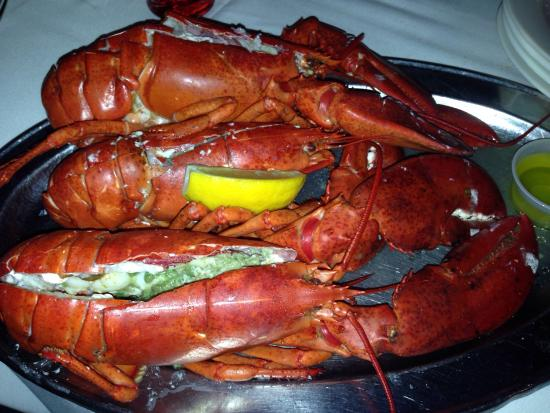 3 Lobsters Delishh Steam Them Picture Of El Cid Restaurant