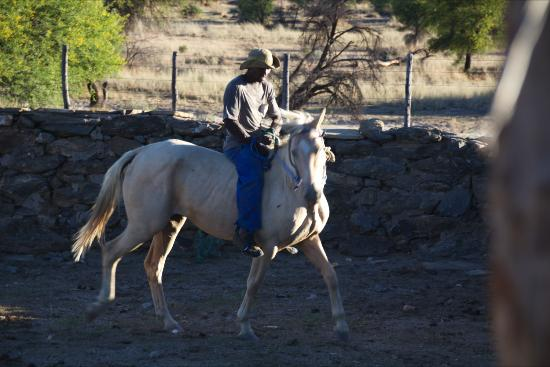 Kivo Lodge: Taming a horse