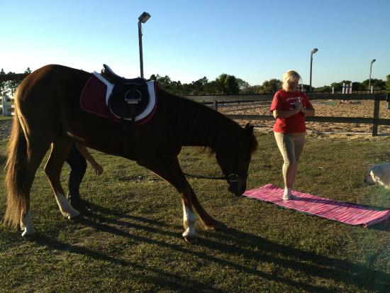Dream Catchers Equine Rescue Yoga with the horses Picture of DreamCatcher Horse Ranch and 14