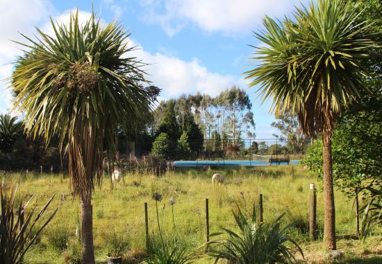 New River Bluegums Bed & Breakfast Homestay: tennis court