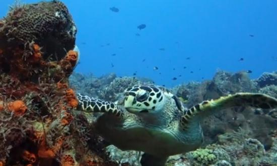 Iberostar Cozumel: Seen while diving