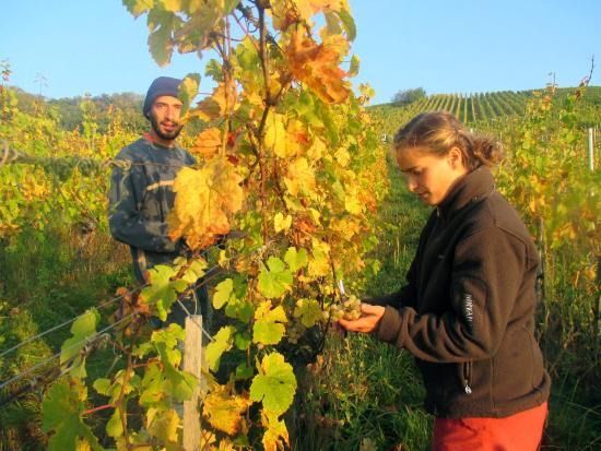 Vins d'Alsace Bio Florian Beck-Hartweg