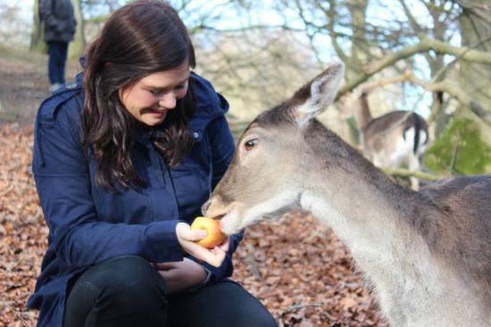 Aarhus, Denemarken: Marselisborg Deer Park