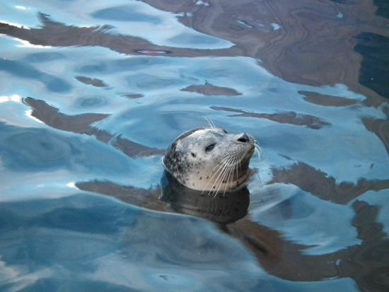 ... - Photo de Hunstanton Sea Life Sanctuary, Hunstanton - TripAdvisor