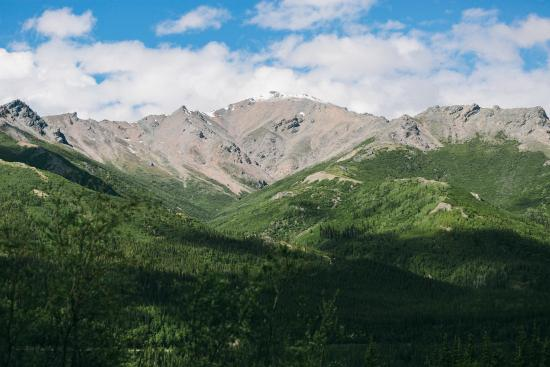 Denali Crow's Nest Cabins: View