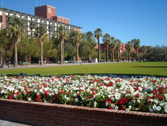 University of Arizona: Jardins floridos
