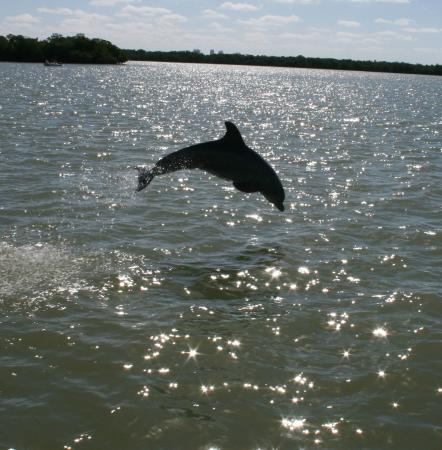 Estero Bay Express Dolphin & Sunset Boat Tours: show off in the air