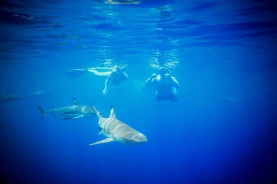 Moana Adventure Tours: Moana Lagoon Tour- Bigger Blacktip Sharks