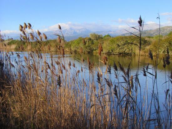 Parque natural s'Albufera de Mallorca: Main canal