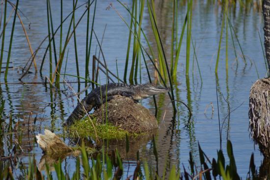 Ritch Grissom Memorial Wetlands : Little guy