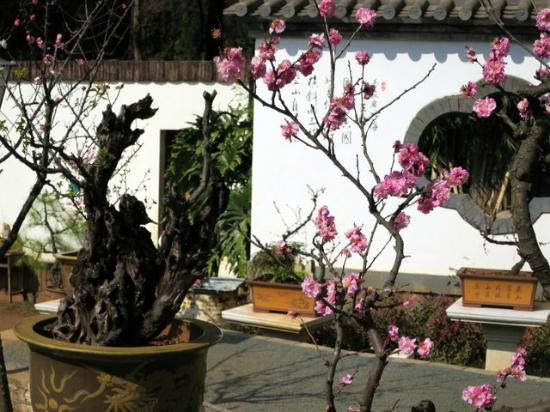Kunming Black Dragon Pool: Walls have poems written on them to read while viewing the flowers.