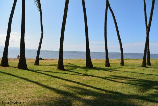 Kaunakakai, HI: trees that line the beach
