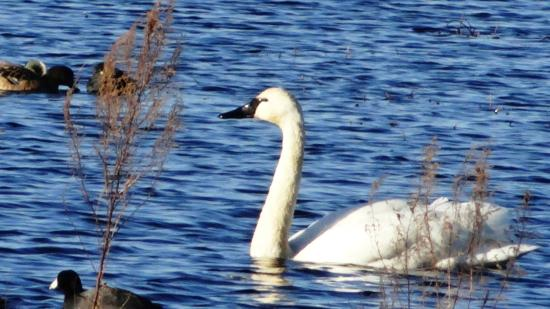 Swanquarter, Carolina del Norte: Wildlife at the lake near cabin