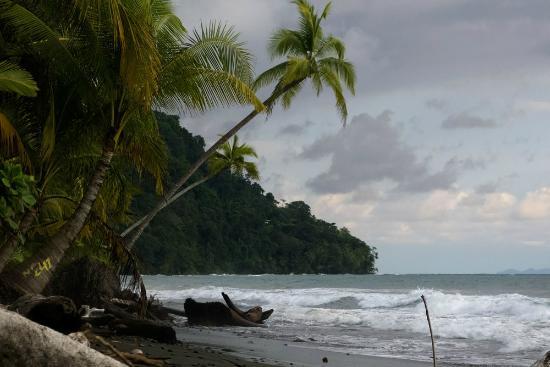 Tiskita Jungle Lodge: beach
