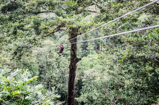 Bastimentos Sky Zipline Canopy Tour: zipping through the tree tops