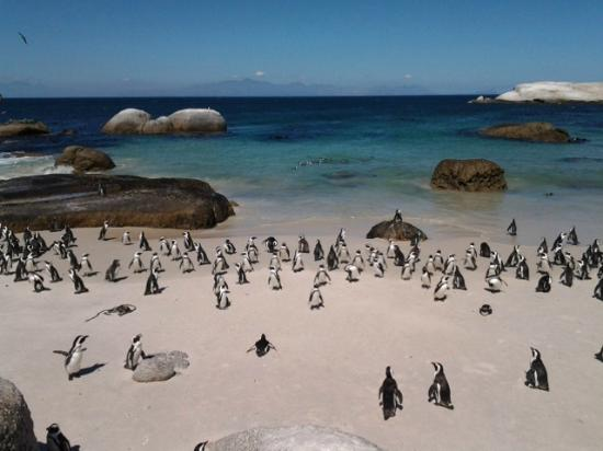 African Eagle Day Tours: Boulders Beach
