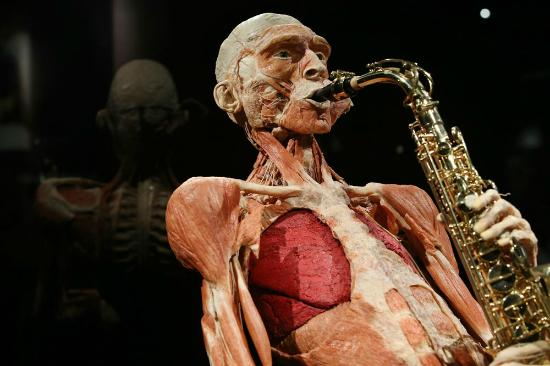 Body Worlds: The saxophone player.