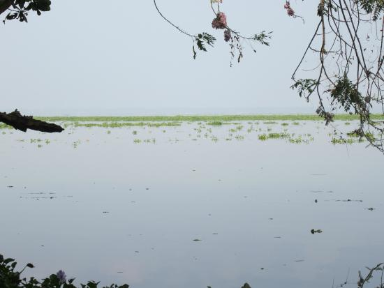 Kumarakom Bird Sanctuary: Bird Sanctuary